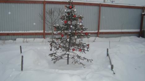 В Ханты-Мансийске во дворах посадят новогодние ели